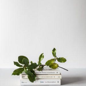 minimalista libros